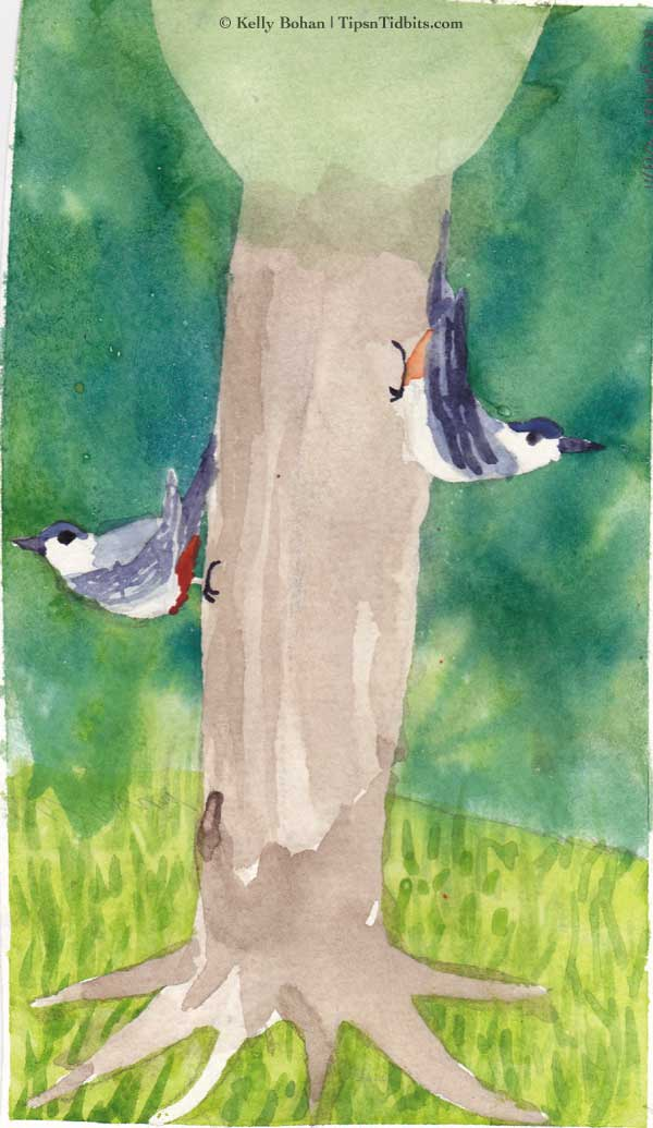 Kelly's Nuthatches (2.20.11)