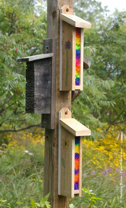 Bee Boxes NOT to Build